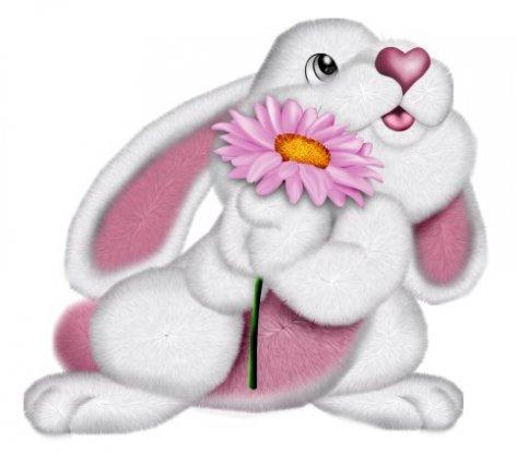 imagenes de conejos