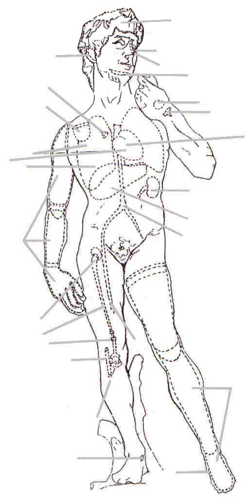 Imágenes de el cuerpo humano por dentro | Imágenes
