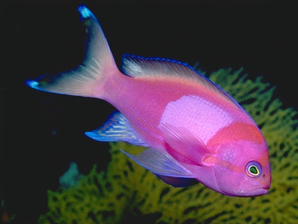 peces im genes