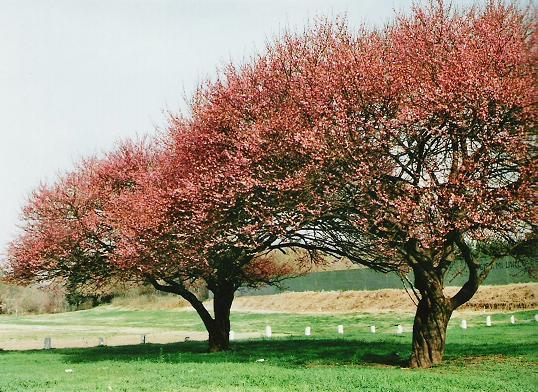 fotos de arboles