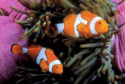 fotos de pez