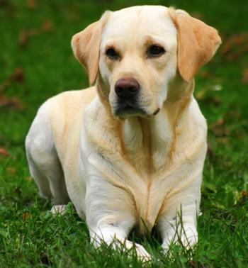imagenes de perro