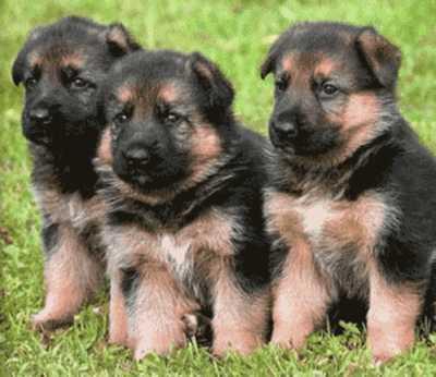 Imagenes de Cachorros