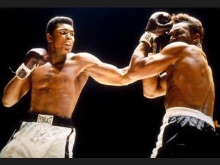boxeadores
