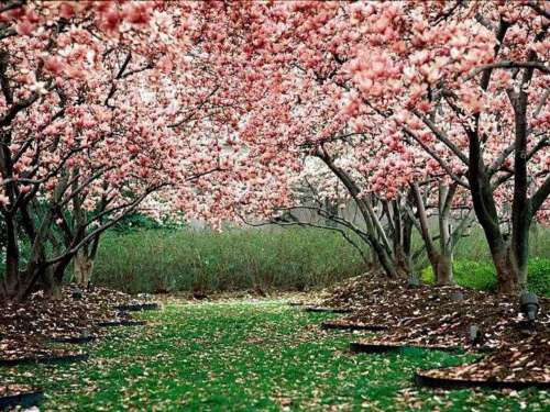 imagenes de primavera