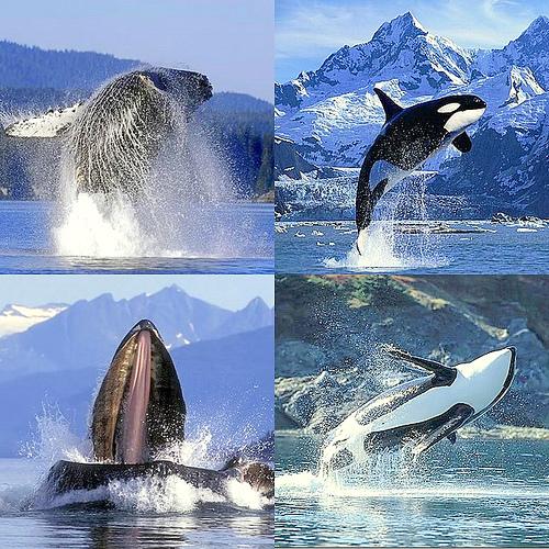 ballenas
