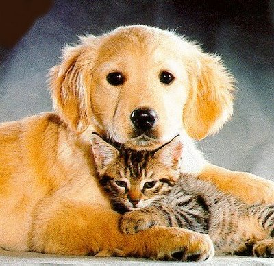 imagenes de perros