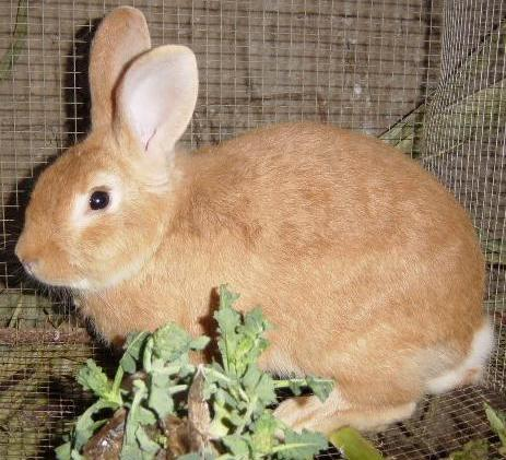 fotos de conejos