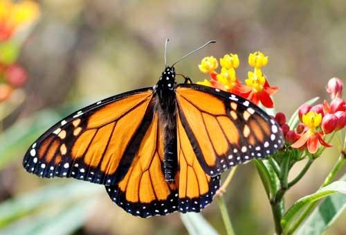 imagenes de mariposa
