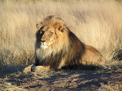 fotos de leon