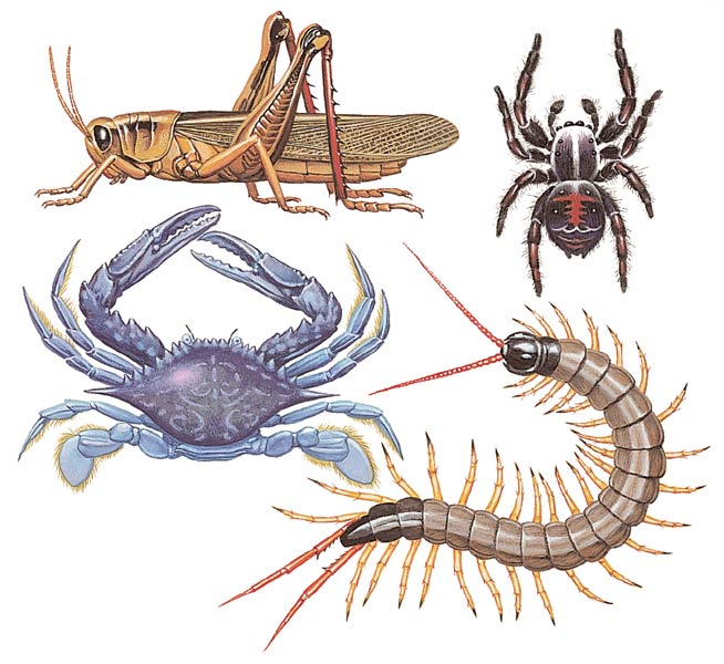 Imágenes de animales invertebrados | Imágenes